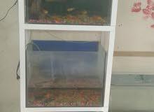 واجهة سمك ثلاث احواض للبيع بشكل كامل