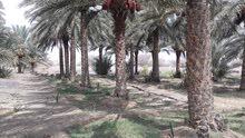 مزرعه للبيع القابل وادي نام يوجد فيها بئر وماي وفير واشجار نخيل وقت  وري حديث