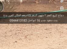 بدع بنت سعود العين