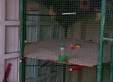Big Cage for birds and other Pets