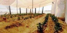 مزرعة بالصوب للايجار بجمعية أحمد عرابي 2021