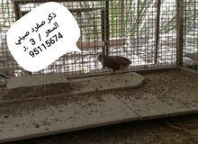 طيور مختلفه روووووووعه