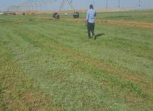لدينا اجود انواع البرسيم السوداني لكافة ولايات سلطنة عمان وباسعار ممتازه