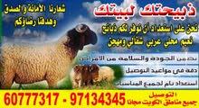 يوجد اغنام عربي نعيمي حيه لتواصل 60777317 مع التوصيل لباب المنزل مجانا