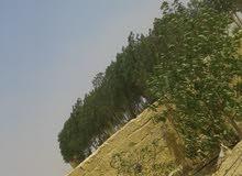 امتلك قطعه ارض موقع متميز تانى نمره من الطريق الرئيسي بجوار منطقه ريفي