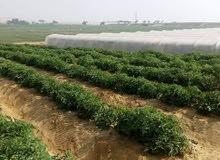 مزرعه بالقرب من القاهره واكتوبر45كم من الرمايه كامله المرافق  شاهد المزيد على:01016557239\م\رحيم