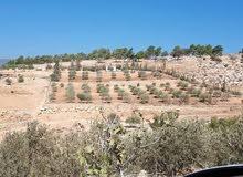 ارض جرش حوض عمامة قرية الكتة 5600م