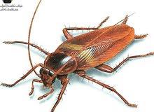 شركة مكافحة الحشرات والصراصير بأقوي المبيدات الحشراية