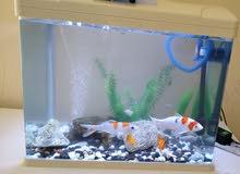 حوض أسماك مع 8 أسماك وجميع الاكسسوارات