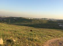 قطعة ارض نص دونم للبيع شفا بدران زينات الربوع حوض الشكارة قرب حي مرج الفرس