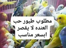 طيور حب للشراء