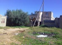 مزرعه مرويه 3هكتار بها منزل هيكل+منزل مستعمل بلقرهبولى مليون دينار ونقاش