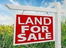 ارض زراعيه للبيع في دير ابزيع
