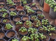 للبيع زهور ونباتات مختلفة