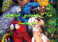 اتبنى الطيور