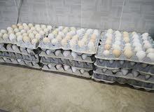 بيض دجاج عماني