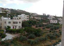 زيت زيتون فلسطيني من جبال نابلس