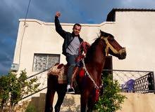 حصان حراث العمر 4 سنين