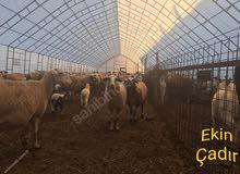 13x50 خيمة حيوانات بدون وصف تفقد الجودة.