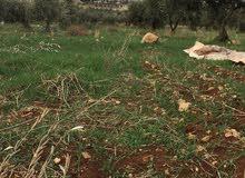 ارض للبيع منطقه العصاره النعيمه