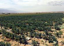 ارض زراعية 200 دونم من المالك مباشرة