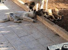 مطلوب مزرعة فيها منزل و بيوت حيوانات و مشيكة