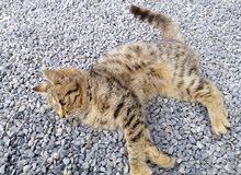 قطه جميله وحبوبه