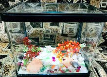 للبيع حوض أسماك كامل صغير 30سم×15سم