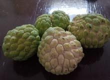 فاكهة القشطه