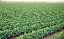 اراضي ومزارع للبيع بمساحات واسعار مختلفه تناسب الجميع