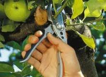 تقليم الاشجار المثمرة ( العنب الزيتون والرمان..... الخ)