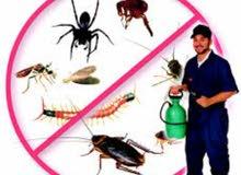 هوم كير لاباده الحشرات المنزليه