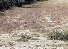 ارض 1310م للبيع -  هرقلة سوسة