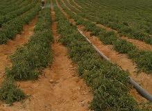 افضل موقع للزراعة في مصر 40000