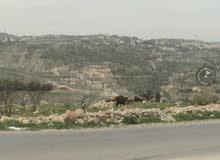 ارض في ابو السوس