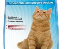 vita day cat dray food