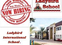 ladybird is hiring
