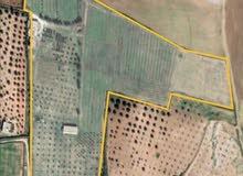 مزرعة فلاحية في تونس لمشروع استثماري