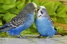 اريد طيور حب كون سعر مناسب