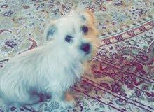 كلبة زينة
