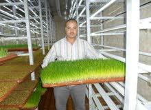 تصنيع غرف استنبات الشعير