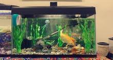 عدد 2 حوض سمك