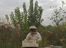 عسل حر قطف الربيع و الحمضيات والجبلي