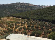 ارض للبيع في السلط جلعد على رأس قمه وسط الغابه الخضراء سعر الدنم