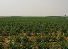 لمحبي الاستثمار الزراعي والإنتاج الحيواني والدجني قطعة ارض علي الاسفلة