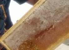 عسل طبيعي علاجي