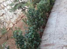 تنسيق وزراعة الحدائق