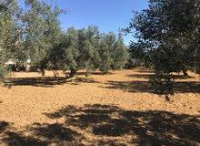أرض للبيع 2400م² مطلة مباشرة على ملعب الصولجان ببير