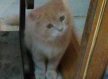 قطه هره بسه cats
