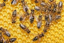 عسل+غذاء ملكات±فيتامينات